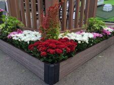 Клумба с цветами